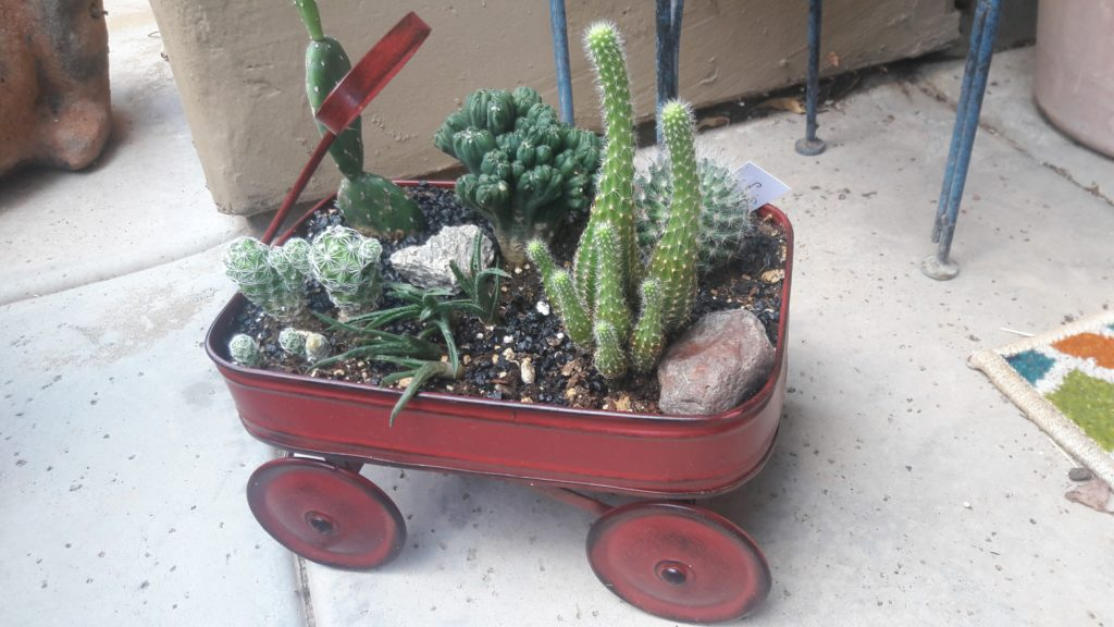 balcony gardening with succulents and perenials