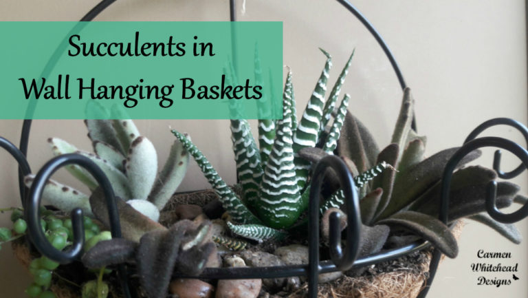Succulents in Wall Hanging Planters - Carmen Whitehead Designs