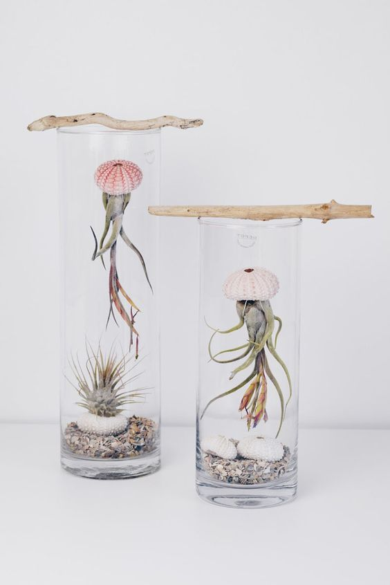 Air Plants: Modern Meets Vintage style