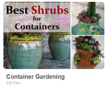 Container gardening pinterest board by Carmen Whitehead Designs