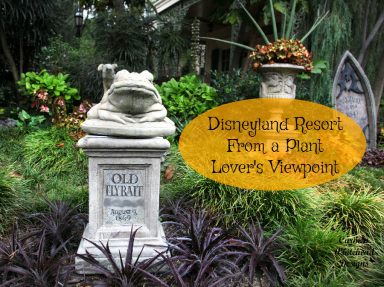 Disneyland Resort from a Plant lover's viewpoint