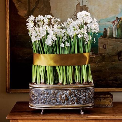 Growing Paper Whites with Carmen Whitehead