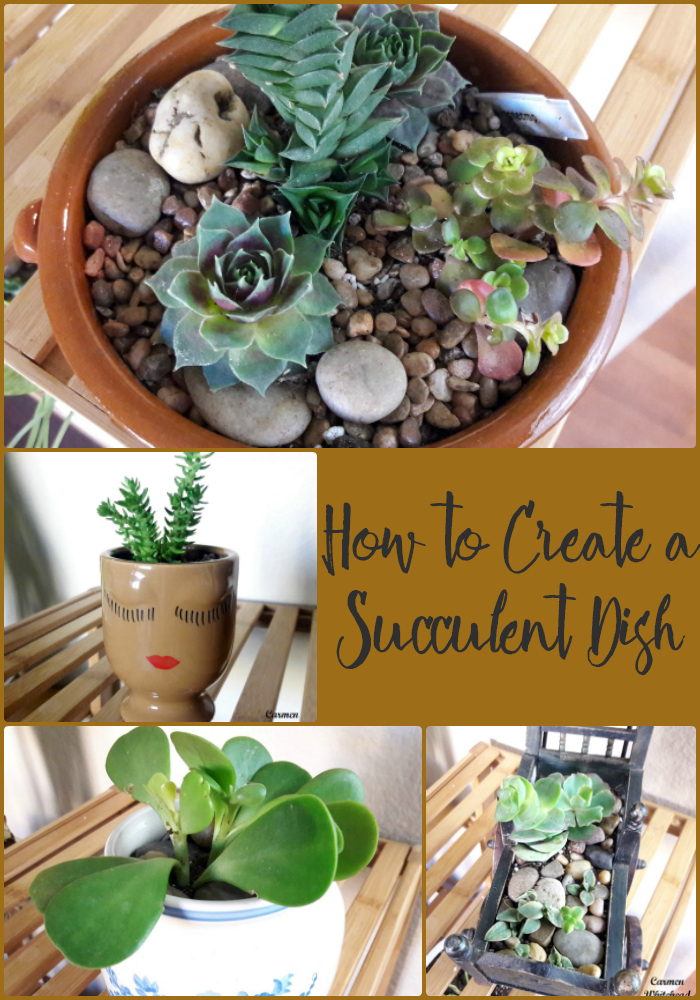 How to Create a Succulent Dish by Carmen Whitehead Designs