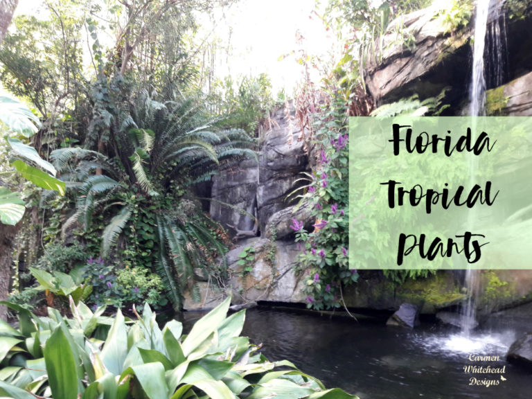 Florida Tropical Plants - Carmen Whitehead Designs