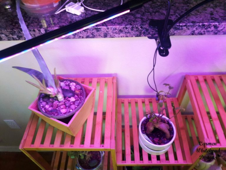 Grow Light Review by Carmen Whitehead Designs