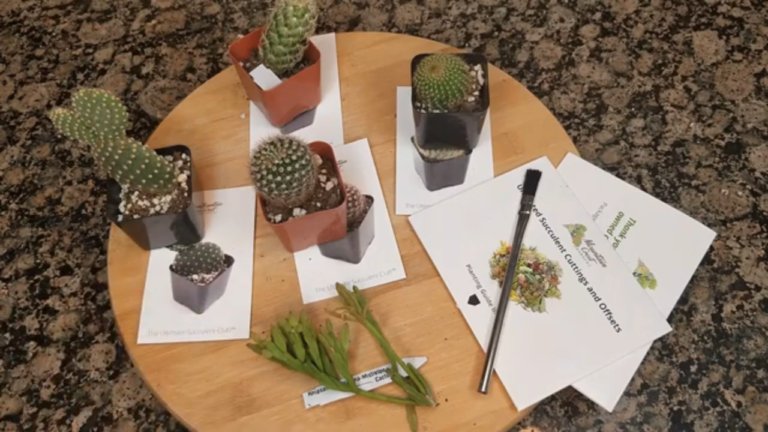 The Ultimate Succulent Club - Carmen Whitehead Designs