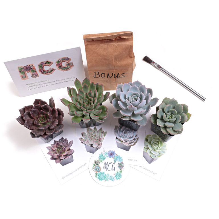 https://mountaincrestgardens.com/the-ultimate-succulent-club/?aff=8