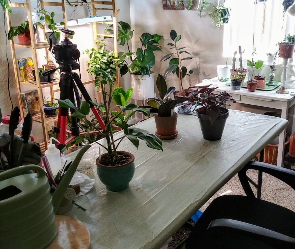 Houseplant Care 101 Online Class by Carmen Whitehead