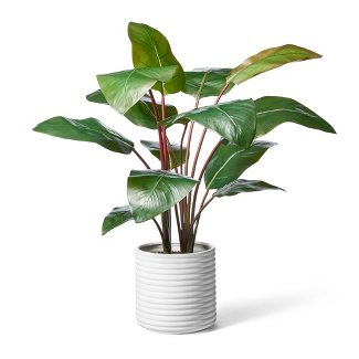 Shopping at Target for Planty Things - Carmen Whitehead