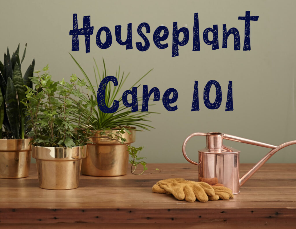Houseplant Care 101 - Online Class for new plant parents By Carmen Whitehead