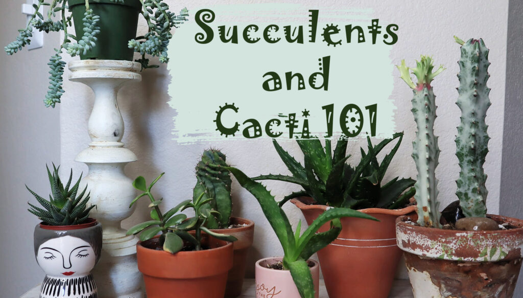 Succulents and Cacti 101 Class with Carmen Whitehead